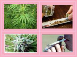 cannabisgroup1